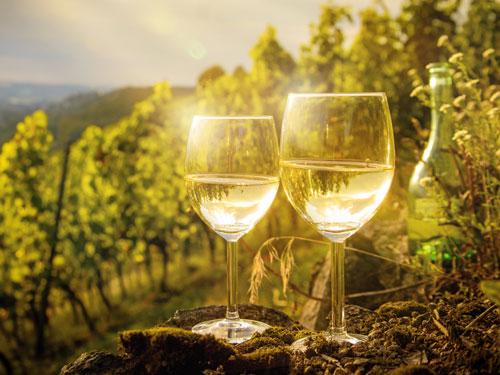 Wein in Flandern