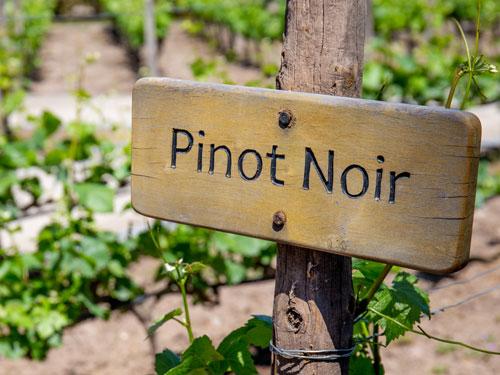 Wein aus Kent und Sussex