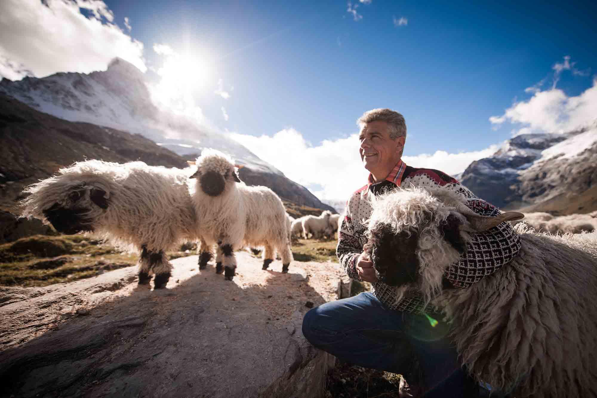 Paul Julen, Gastgeber im Zermatter Romantik Hotel, besitzt mit 300 Schwarznasen die größte Zucht weltweit.