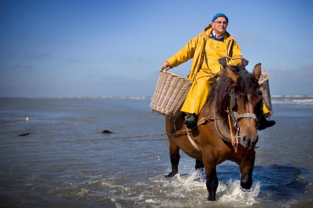 An der belgischen Küste werden Krabben traditionell noch von berittenen Fischern gefangen. ©belgischekueste.be